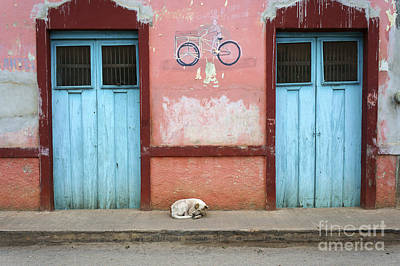 Photograph - Sleeping Dog Santa Elena Mexico by John  Mitchell