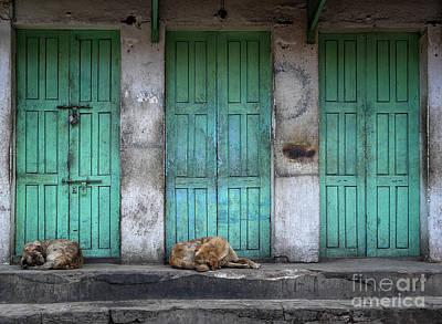 Photograph - Sleeping Dogs by IPics Photography