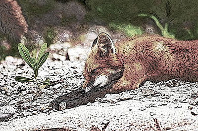 Photograph - Sleeping Fox by Claire Bull