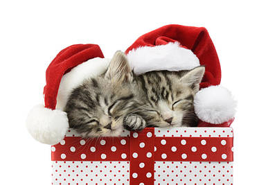 Sleeping Kittens In Presents Art Print by Greg Cuddiford