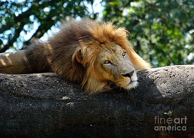 Art Print featuring the photograph Thinking Lion by Lisa L Silva
