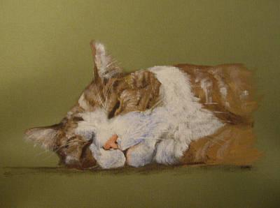 Orange Tabby Drawing - Sleeping Orange Tabby Cat by Barbara Lightner