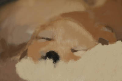 Photograph - Sleeping Puppy by Marta Alfred