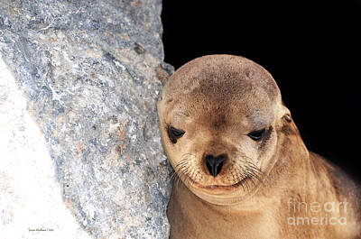 Sleepy Baby Sea Lion Art Print