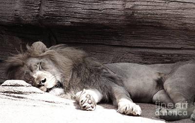 Photograph - Sleepy Beauty by Andrea Anderegg