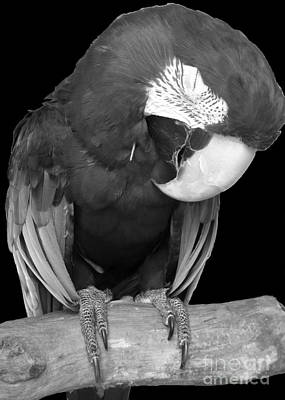 Sleepy Bird  There Is A Nap For That B And W Art Print by Barbie Corbett-Newmin
