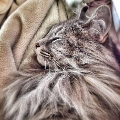 Photograph - Sleepy Girl by Kathleen Messmer