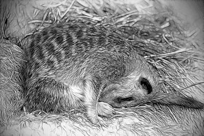 Photograph - Sleepy Head by Fiona Messenger