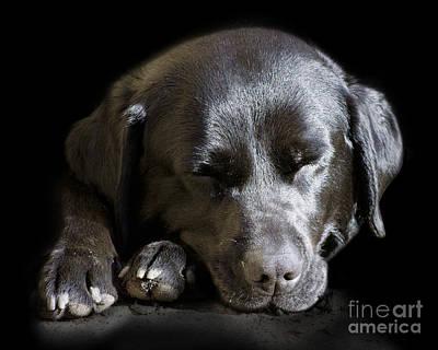 Four-legged Friends Digital Art - Sleepy In The Spotlight by Linsey Williams