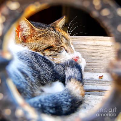 Sleepy Head Photograph - Sleepy Kitty by Antony McAulay