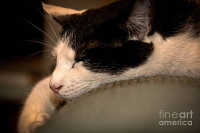 Photograph - Sleepy Kitty by Cheryl Baxter
