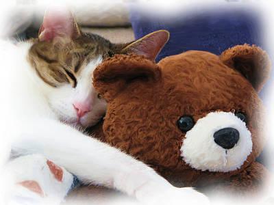 Doze Digital Art - Sleepy Kitty With Teddy  by Patti Adkins