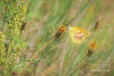 Photograph - Sleepy Orange Butterfly by Marianne Jensen