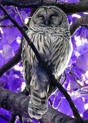 Photograph - Sleepy Owl 1 by Laurie Tsemak