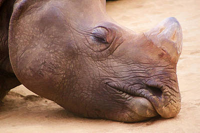 Digital Art - Sleepy Rhino by Photographic Art by Russel Ray Photos