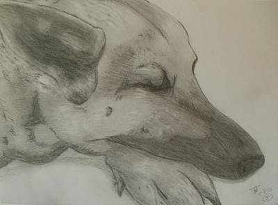 Drawing - Sleepy Shepherd by Thomasina Durkay