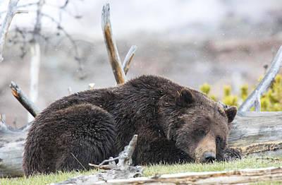 Sleepy Time Bear Original by Deby Dixon