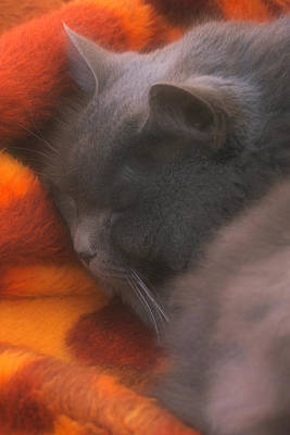 Photograph - Sleepy Time by Joann Vitali