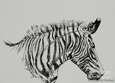 Drawing - Sleepy Zebra by Susan Herber