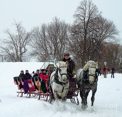 Photograph - Sleigh Ride On The Plains Of Abraham by Anne Gordon