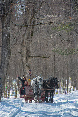 Photograph - Sleigh Ride Through The Maples by Cheryl Baxter