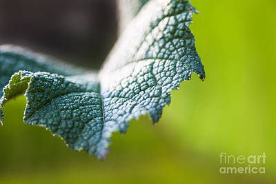 Slice Of Leaf Art Print