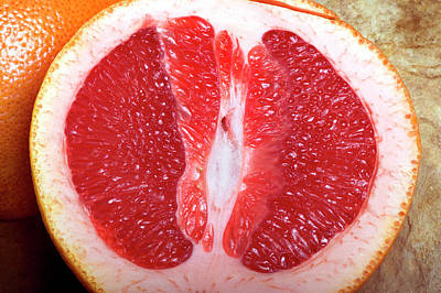 Grapefruit Photograph - Sliced Pink Grapefruit by Pascal Goetgheluck/science Photo Library