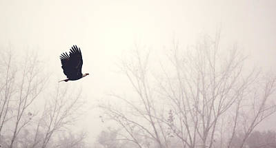 Photograph - Slicing Through The Fog by Melanie Lankford Photography