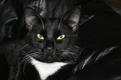 Photograph - Slick The Black Cat by Tikvah's Hope