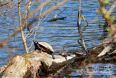 Photograph - Slider And Red Bellied Turtles 20120317_74a by Tina Hopkins