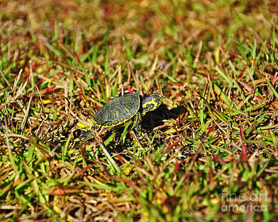 Pond Turtle Photograph - Slider To Go by Al Powell Photography USA