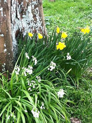 Photograph - Sligo Spring by Patti Steiner Elliott