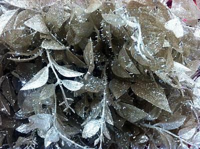 Photograph - Silver Leaves by Alohi Fujimoto