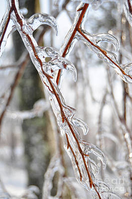 Photograph - Sloping Icicles by Staci Bigelow