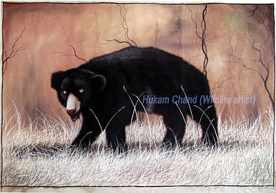 Sloth Painting - ''sloth Bear In Hunting Position'' by Hukam Chand Wildlife artist