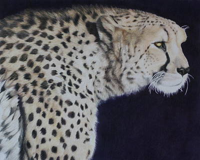 Cheetah Drawing - Slow Cheetah by Jamie Holland Cummins