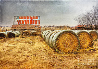 Slumbering In The Countryside Art Print by Betty LaRue