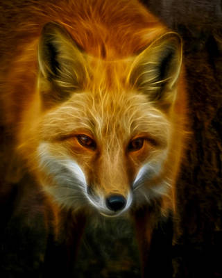 Fox Digital Art - Sly Fox by Ernie Echols
