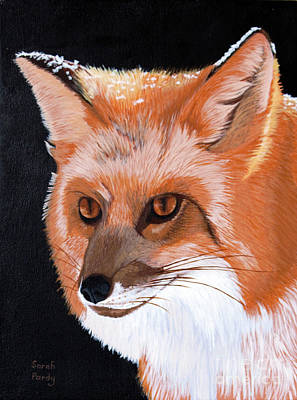 Sly Red Fox Art Print