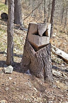 Photograph - Sly Stump by Gordon Elwell