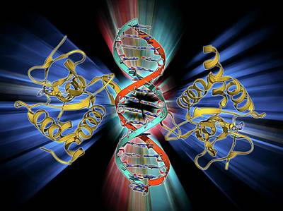 Smad4 Protein Domain Bound To Dna Art Print by Laguna Design