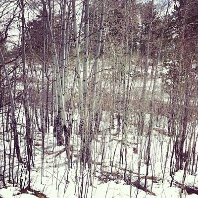 Instagram Photograph - Small Aspen Tree Grove by Posters of Colorado