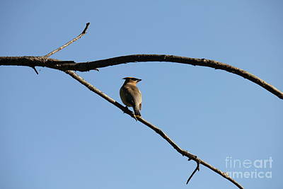 Photograph - Small Bird Bandit by Donna Munro
