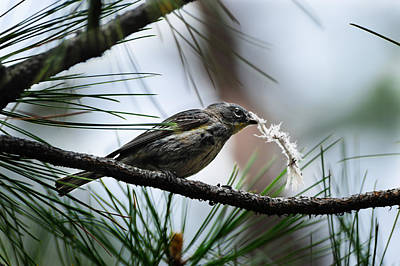 Photograph - Small Bird by Donald Fink
