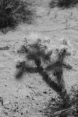 Photograph - Small Cactus by Robert  Moss