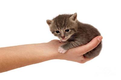 Pet Care Photograph - Small Cat by Viktor Pravdica