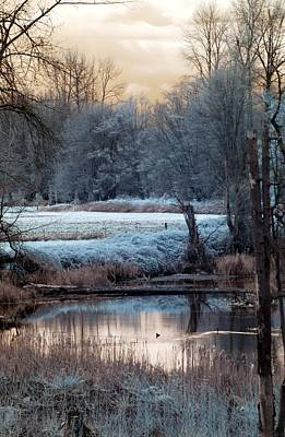 Photograph - Small Duck Frosty Morning by Rebecca Parker