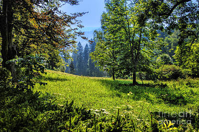 Photograph - Small Field Transylvania by Rick Bragan