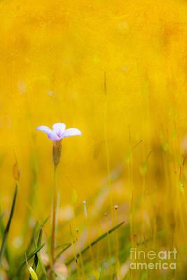 Abstract Digital Painting - Small Flower In Moss - Greensboro North Carolina II by Dan Carmichael