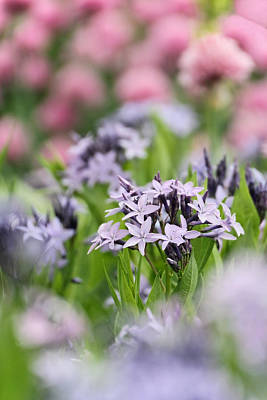 Photograph - Small Flowers by Theo OConnor